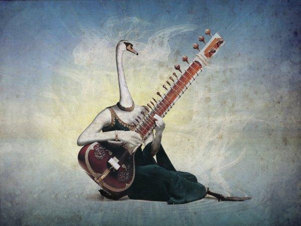 Sitar Swan